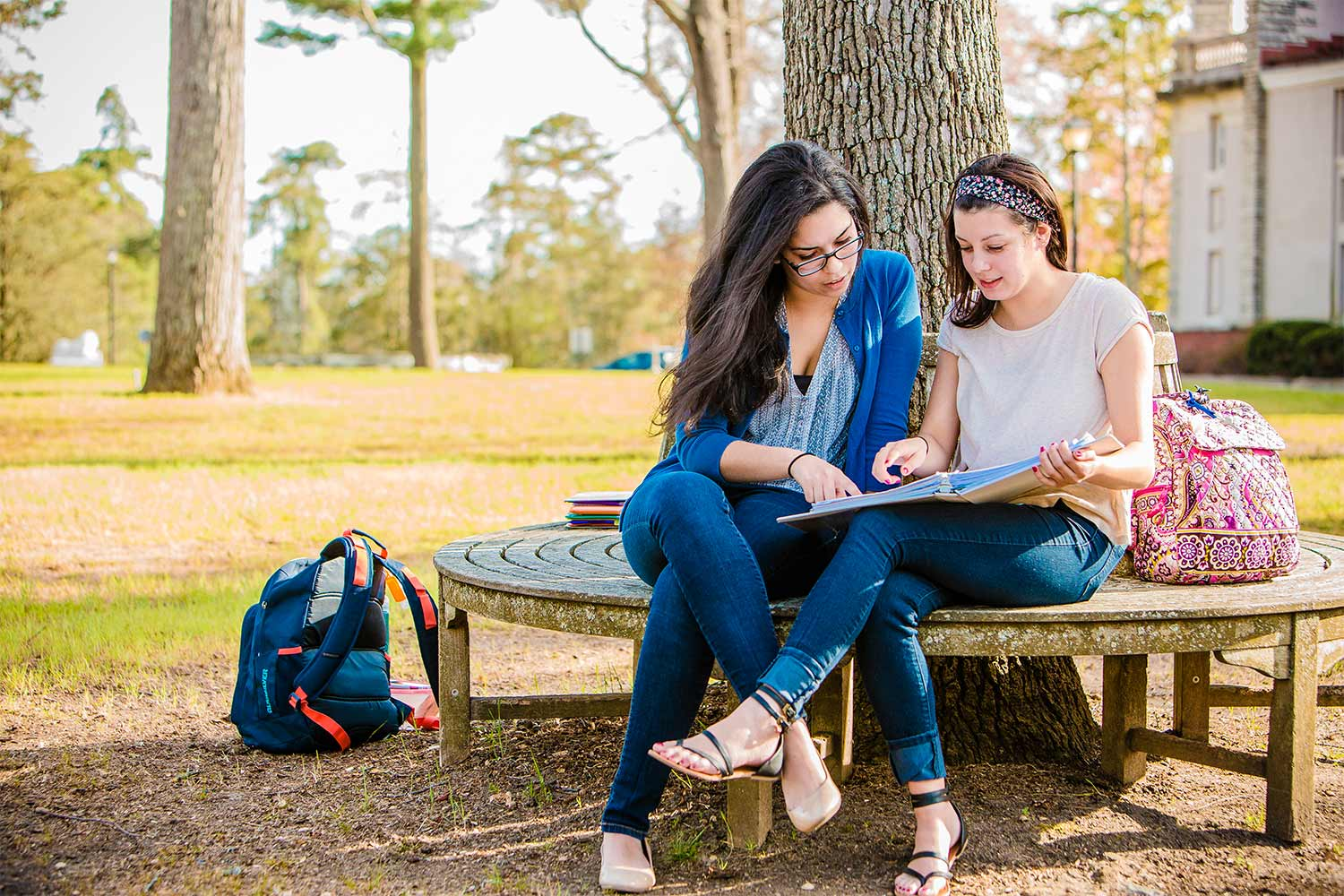 Two female students sitting on wrap-around bench of a tree and doing schoolwork.